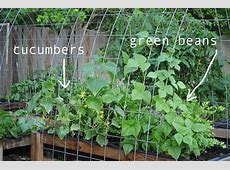 Garden Green Beans Growing Garden Ftempo