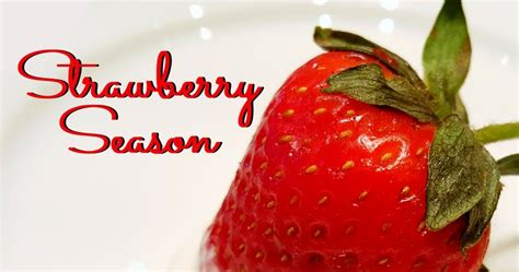 when is strawberry season strawberry season in arkansas tie dye travels with kat robinson arkansas s most respected