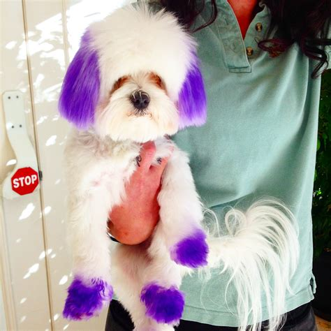 Things To Consider When Coloring Your Pet Tips And