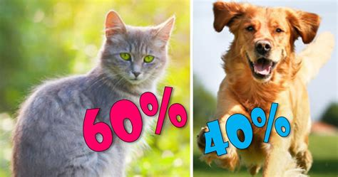 personality    cat   dog playbuzz