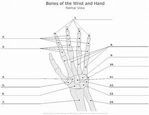 10 Best Images Of Posterior Muscle Man Worksheet