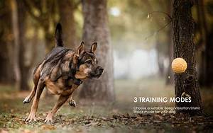 Iegeek Dog Training Collar For 2 Dogs
