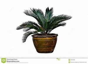 Pflanztopf Für Palmen : xxl matuba pflanztopf rund mit 60 cm durchmesser und 59 cm ~ Lizthompson.info Haus und Dekorationen