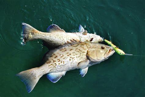 fishing spots grouper river crystal gulf florida gps map offshore water mobile reefs wrecks coordinates flfishingspots