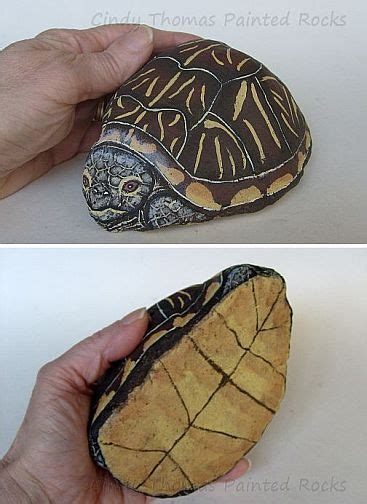 Abby The Painted Rock Box Turtle By Cindy Thomas