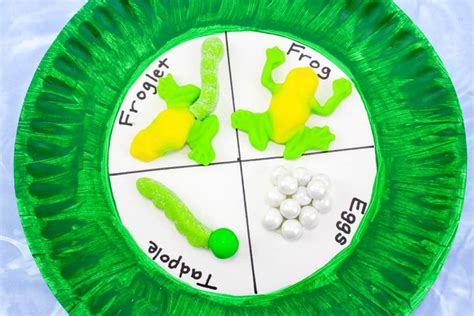 frog life cycle paper plate craft  kids  science