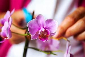 Orchideen Schneiden Video : orchideen schneiden wann warum und wie ~ Frokenaadalensverden.com Haus und Dekorationen