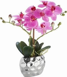 Orchideen Ohne Topf : home affaire kunstblume orchidee 30 cm kaufen otto ~ Eleganceandgraceweddings.com Haus und Dekorationen