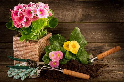 e commerce gamm vert s empare du portail web plantes et jardins com