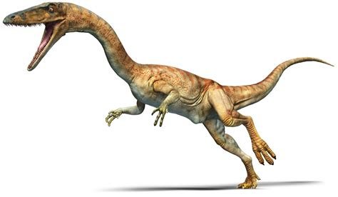 Coelophysis Coelophysis Facts Dk Find Out