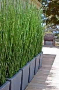 sichtschutz balkon pflanzen die besten 17 ideen zu balkon sichtschutz auf sichtschutz garten terrasse und