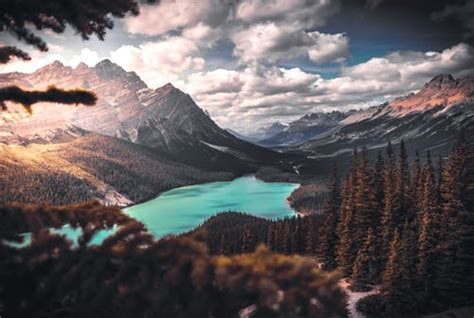 amazing desktop background  pexels