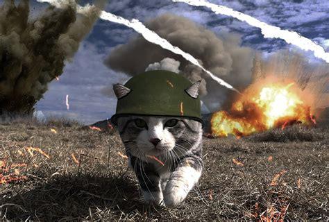 usuarios trolean  este gato  una batalla de photoshop