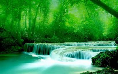 Water River Greenery Wallpapers 3d Widescreen Trees
