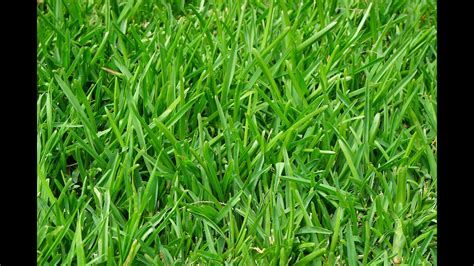 How To Get Rid Of Lawn Weeds Naturally