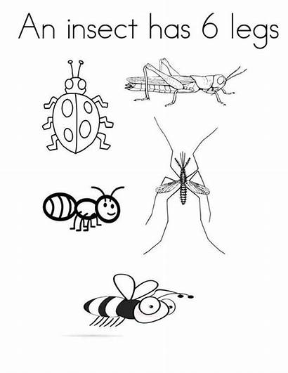 Legs Coloring Insect Six Which Sky