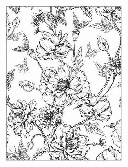 Coloring Pages Flowers Floral Designs Adult Detailed