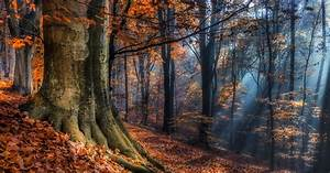 landscape, , nature, , sun, rays, , forest, , fall, , leaves