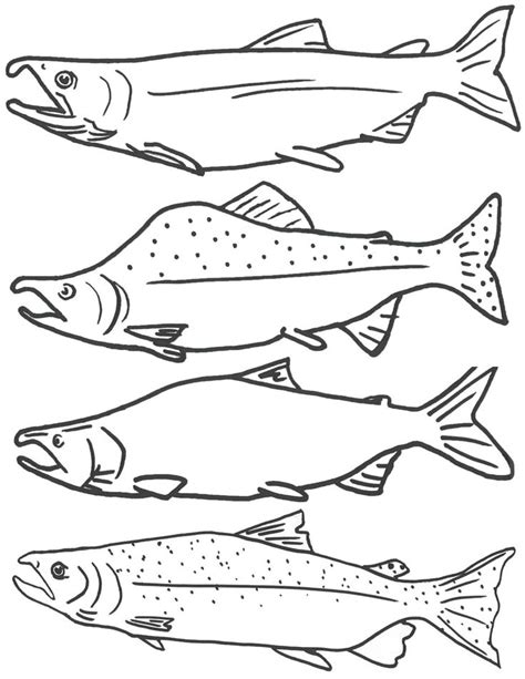 printable fish coloring pages free coloring page of salmon fish free printable fish