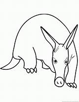 Anteater Animal 123coloringpages sketch template