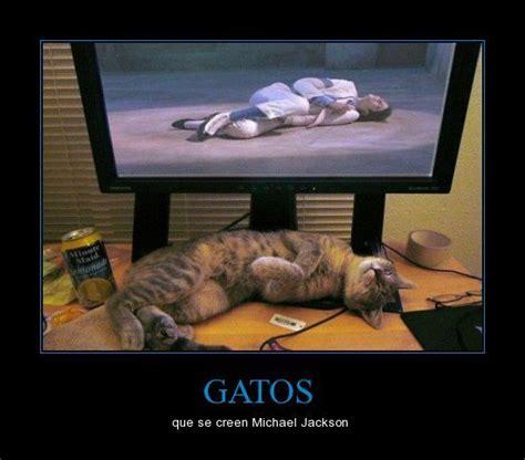 Memes De Gatos - estalla de risa con memes de gatos memes and humor