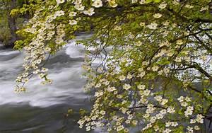 Spring, Landscape, Nature, Merced, River, Yosemite, National