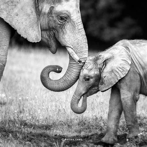 animals  black  white photography