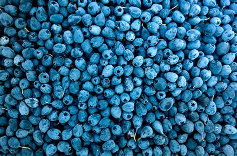 stock photo  berry blueberry blur