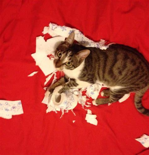 mon chat va souvent au toilette thank you for ordering the cat starter kit mon chat sans nom