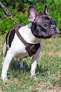 Buy Leather Dog Puppy Harness Small Breed Dog Harness  French