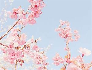 cherry blossom, japan, nature, pastel, pink, sakura ...