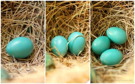 what color are bluebird eggs bluebird eggs color sialis picture of the week cowbird