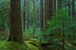 Sol Duc Forest Image