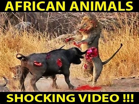 African Wild Life National Geographic Documentary