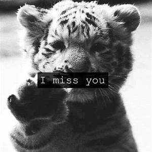 Cute Baby Tiger Black and White Quotes | Cute Animals ...