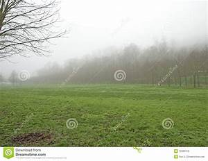 Morning Forest With Fog Stock Photos