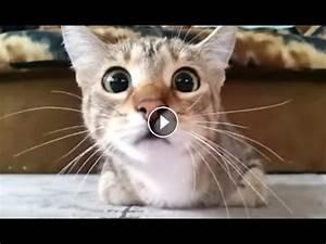 Funny Videos Of... Funny Cat Videos