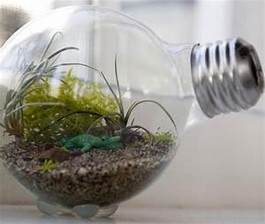 Terrarium Plante Deco : terrarium plante ampoule ~ Dode.kayakingforconservation.com Idées de Décoration