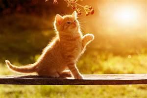 Katze Kotzt Viel : tiere katzen z chten leichtgemacht so viel aufwand steckt ~ Frokenaadalensverden.com Haus und Dekorationen