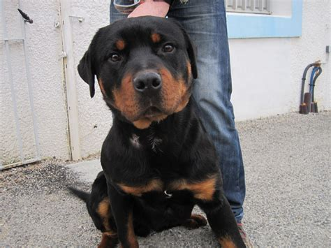 Black And Brown Dogs  Wwwpixsharkcom  Images Galleries. Living Room With Two Windows. Small Narrow Living Room Furniture Arrangement. Black Glass Living Room Table. Living Room Feature Wall Examples. Living Room Green. Living Room Floor Plans With Corner Fireplace. Living Room And Dining Room In One Small Space. Living Room Decorating Ideas Leather Sofa