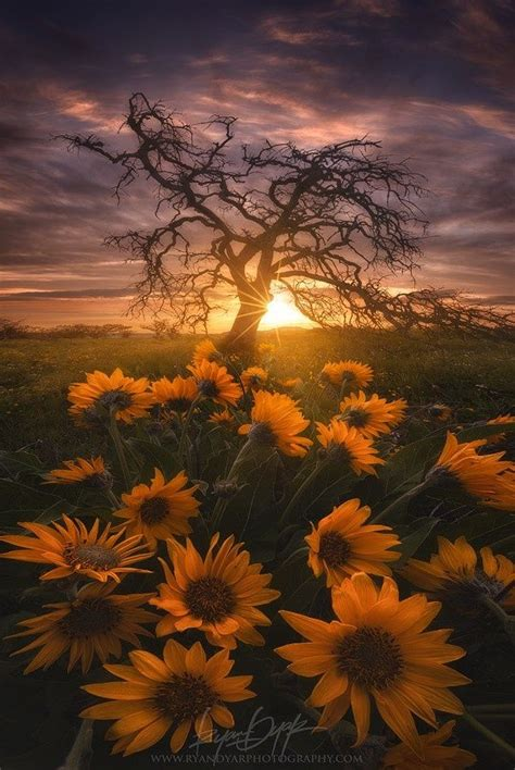 nature photography ideas  pinterest summer