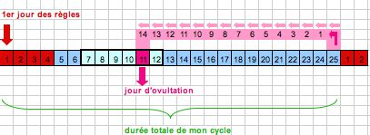 calculer cycle periode d ovulation carabiens le forum