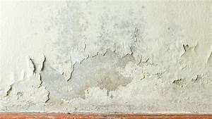 Was Hilft Gegen Mücken In Der Wohnung : schimmel in der wohnung was hilft sind untersuchungen sinnvoll spiegel online ~ Markanthonyermac.com Haus und Dekorationen