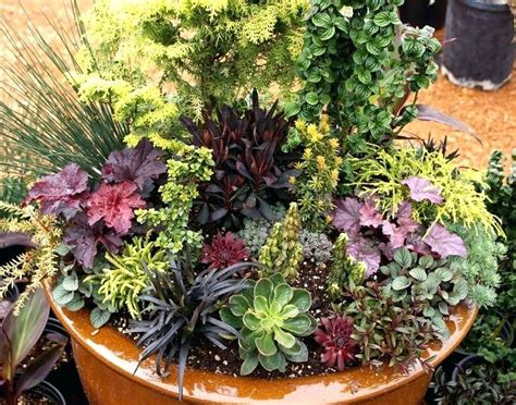 Perennials Container Gardening Perennial Container Plants