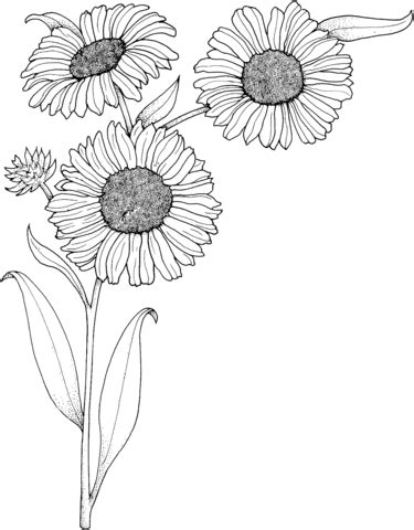 realistic sunflowers coloring page  printable coloring pages