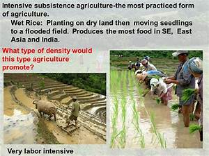 The gallery for --> Intensive Subsistence Farming Rice