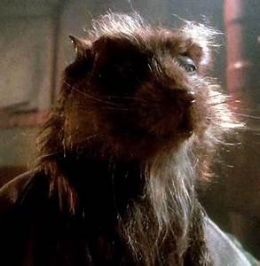 Splinter (Teenage Mutant Ninja Turtles) | Non-alien ...