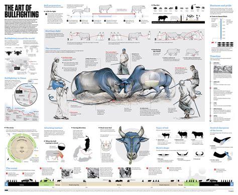 Bull Wrestling 2 Bulls Fighting Each Other Infographic