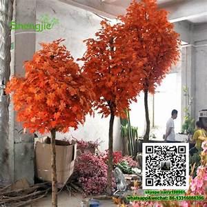 Kleine Bäume Bis 3m : sjfs 3 piante ornamentali da interno decorazione della ~ Articles-book.com Haus und Dekorationen