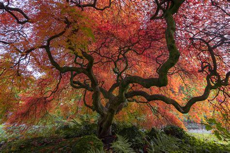 Japanischer Garten Eingangstor by Herbst Im Japanischen Garten
